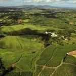 Nature et découverte en Martinique – l'Île aux fleurs
