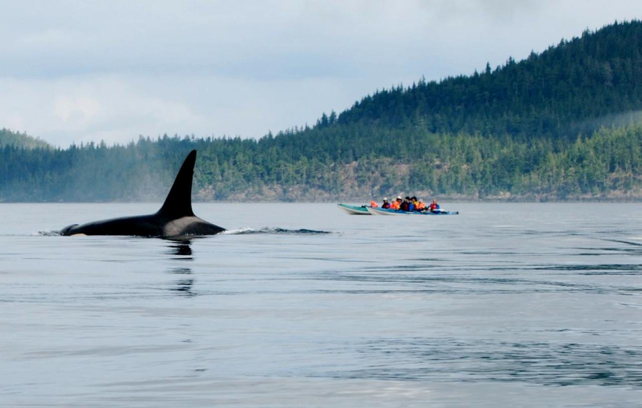 plus beaux spot de kayak au canada