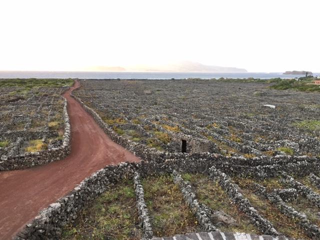 ilha de pico aux acores