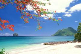 En attendant la reprise des activités en Martinique, voici ce qu'il faut savoir!