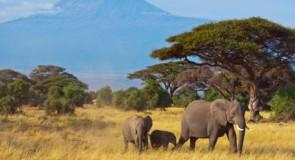 [TECHNO] Des caméras équipées de l'intelligence artificielle pour protéger les éléphants de Tanzanie