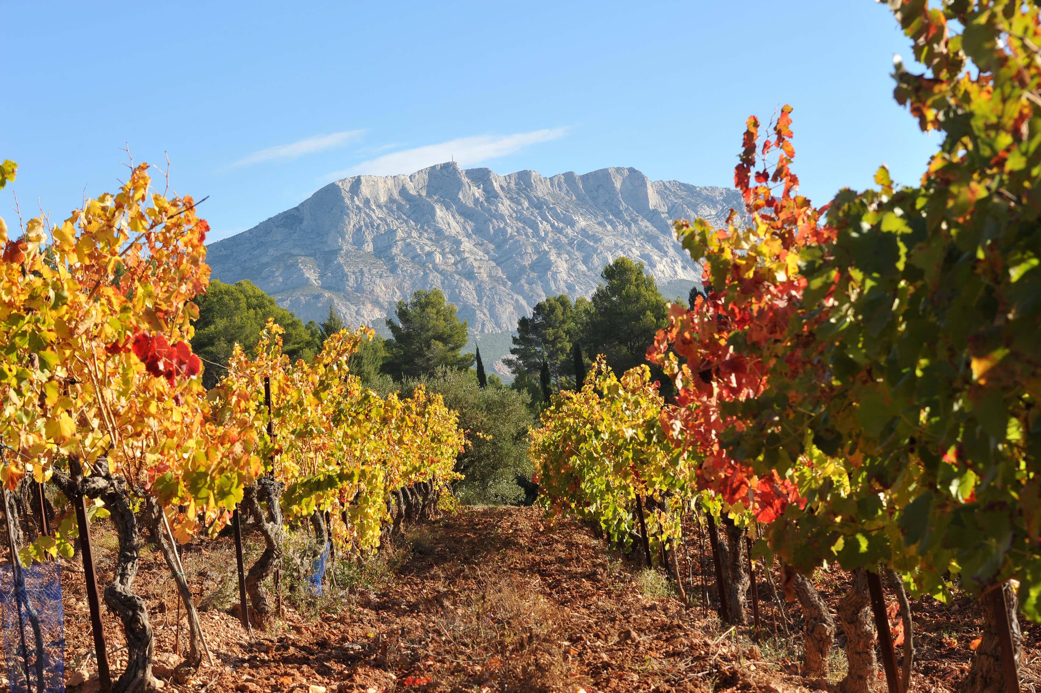vignobles aix en provence