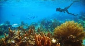 Holland America naviguera vers le Mexique, Hawaï et les Caraïbes cet automne