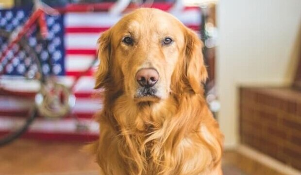 [INSOLITE] Seul le chien est accepté à bord des avions américains en tant qu'animal de « soutien émotionnel »