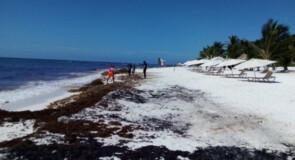 Les hôtels de Cancun et de la Riviera Maya dépensent jusqu'à 5700 dollars par mois pour le ramassage des algues sargasses