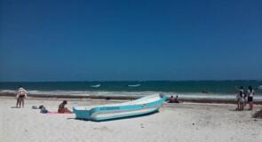 Les algues sargasses envahissent les plages de l'État de Quintana Roo au Mexique